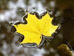 Фотоконкурс «В поисках осени»
